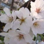 [photo,diary] 雑記ではありますが春らしくなってきましたし…..