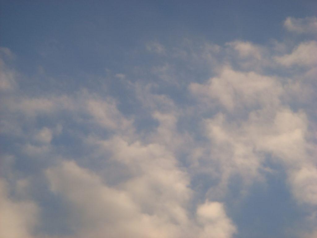 荒戸港西公園付近_20121224