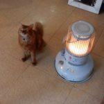 cats photo at claptrap(クラップトラップの猫写真集) #diary