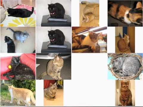 CatSlideShow by VC#